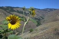 Nez Perce Land