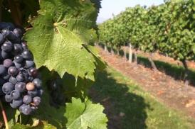 Glacier Peak Winery