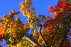 Autumn in Cooperstown