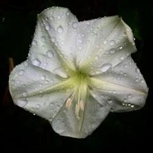 petals after the rain