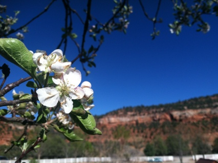 Kanab Canyon