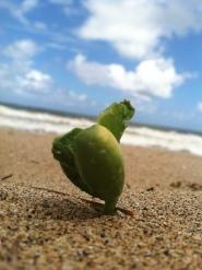 Pod on Oahu